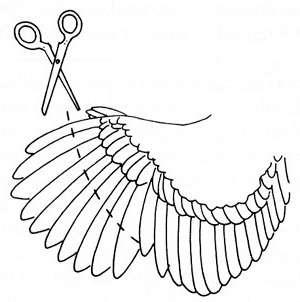 Крыло нужно расправить так, чтобы понять, где начинается зона чувствительности