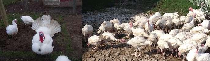 В первые дни жизни птенцов кормят
