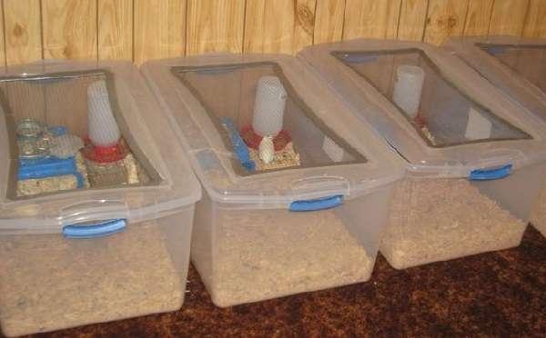 Клетка из пластика – это современный вариант, который отличается долговечность, надежностью и практичностью.