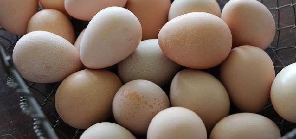 На стоимость влияет сезонность получения яиц цесарки