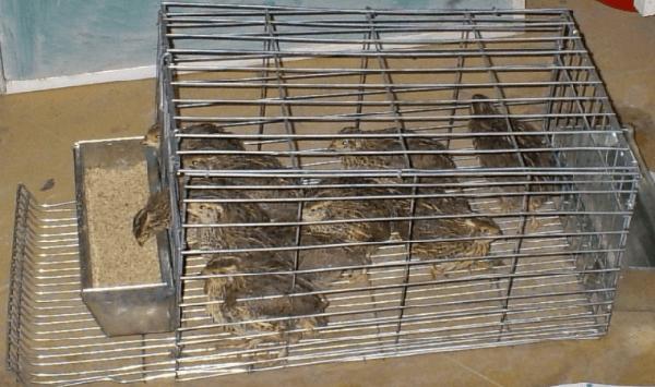 Клетка из металлической сетки может быть с каркасом и без него