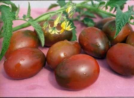 Разновидности этого сорта отличаются размером (60-120 г) и цветом плодов (бывают даже черные), а также сроками созревания: средний и поздний.