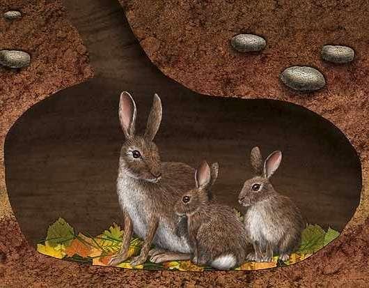 Секреты успешного разведения кроликов в яме