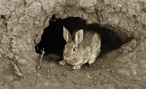 Видео об особенностях разведения кроликов я мах поможет фермерам узнать больше информации