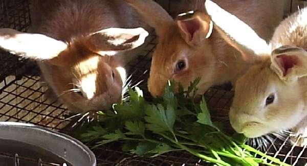 кроликам нужен сбалансированный рацион