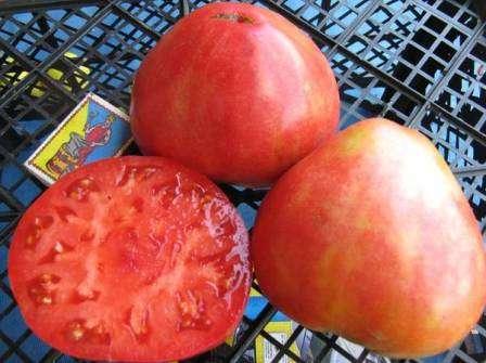 Как выглядят плоды, вы можете увидеть на фото, предоставленном ниже.
