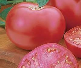 Отличный томат для средней полосы, который отличается высокой урожайностью. Отлично противостоит вирусам и грибку.