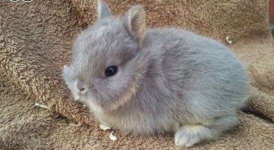 при неправильном отъеме от самки крольчата особенно подвержены разным желудочно-кишечным и простудным недугам