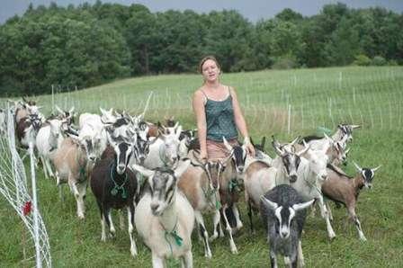 В среднем, летом, козы обычно получают примерно двести граммов комбикорма и около килограмма овощей в день, это в комплексе со свежескошенной травой, либо травой, съеденной ими на пастбище.