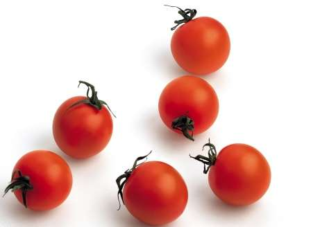 В этой статье вы найдете описание и фото раннеспелых и неприхотливых сортов помидоров двух типов: • низкорослые (детерминантные) – до 1 м; • высокорослые (индетерминантные) — выше 1 м.