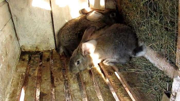 сенники для кроликов своими руками