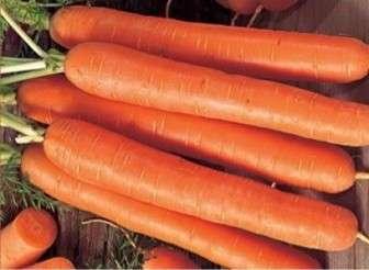 Сорт известен большими урожаями. Габаритные и выровненные корнеплоды весом до 200 г обладают отменным вкусом.