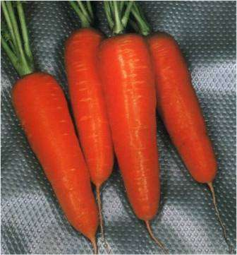 Вкусные цилиндрические плоды среднего размера (до 18 см). Не нуждаются в окучивании, проявляют прекрасную лежкость. Сладкие.
