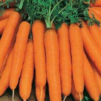 Эти семена набрали популярность из-за сладкого вкуса, устойчивости к болезнетворным микроорганизмам и возможности получить большой урожай.