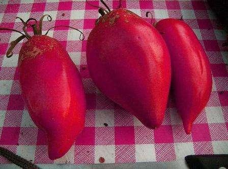 Очень популярный и особенно вкусный томат.