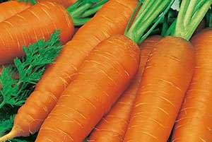 Входит в список самых старых сортов моркови.