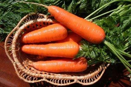 Возможна посадка на зиму. Морковка яркая, очень полезная и сладкая.