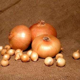 Урожайность этого сорта составляет до 6 кг/м². Он отличается хорошей устойчивостью к болезням и способностью без изменений храниться длительное время.