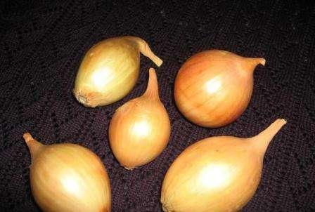 Отзывы показывают, что с 1 квадратного метра реально собрать 4 кг качественных корнеплодов.