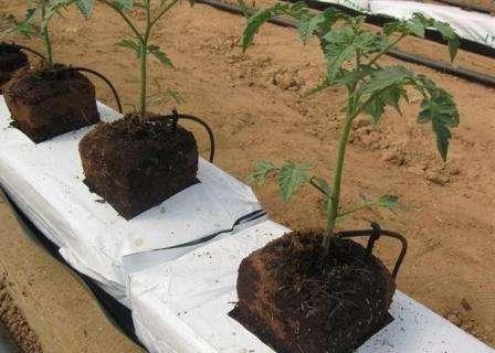 Использовать кокосовые брикеты совместно с торфом придумали находчивые агрономы.