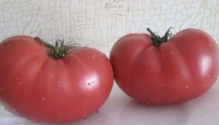 Малиновый гигант выделяется не только внушительным размером плодов (до 500 г), но и высокой урожайностью.