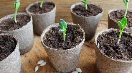 Наибольшую роль играет уход за растениями.