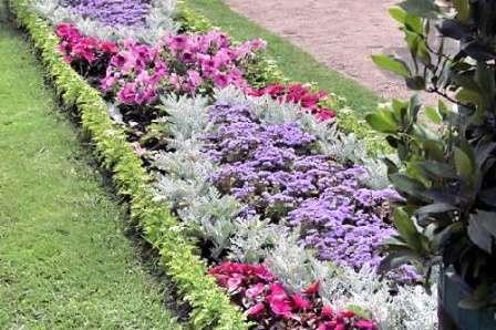 Цветники-рабатки