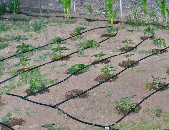 Бочку или канистру нельзя располагать на самом солнцепеке, так как полив горячей водой обычно растениям не нравиться.