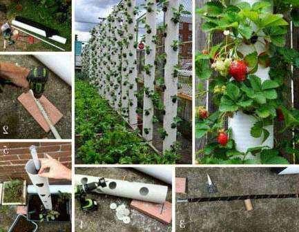 О том, что можно выращивать клубнику в мешках, вы наверняка слышали. А как насчет труб?