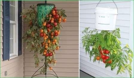А не хотите ли попробовать вот такой необычный способ выращивания помидоров?