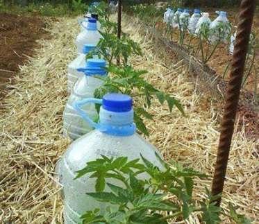 Второй: сделать в бутылке отверстия и вкопать ее частично в землю возле огородных культур для постепенного полива в ваше отсутствие.