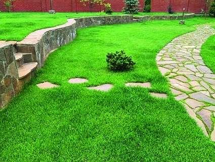 Партерный. Играет исключительно декоративную роль, потому выбора особенно нежной и насыщенной по цвету растительности, а также постоянного тщательного ухода.