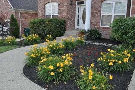Красиво цветущие кустарники или крупные цветы на газоне — это всегда красиво и актуально.