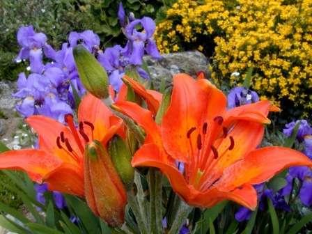 Красиво будет выглядеть также сочетание двух противоположных цветов и близкого соседа одного из них.