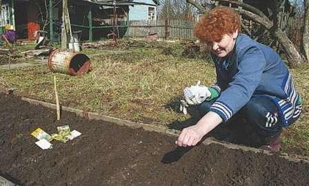 В начале можно разместить семена немного чаще, чем рекомендовано, чтобы в дальнейшем проредить рядки, оставив самые крепкие растения.