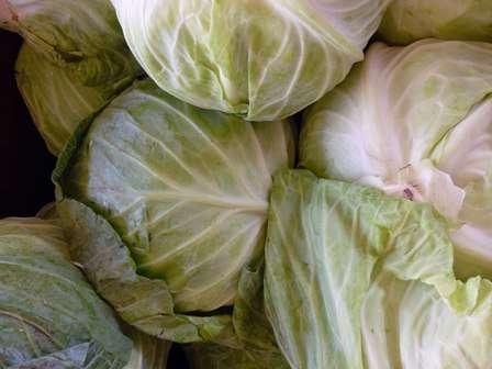 Говорить о хорошем урожае капусты принято в тех случаях, когда с 1 м² удается собрать не менее 1,5 кг.