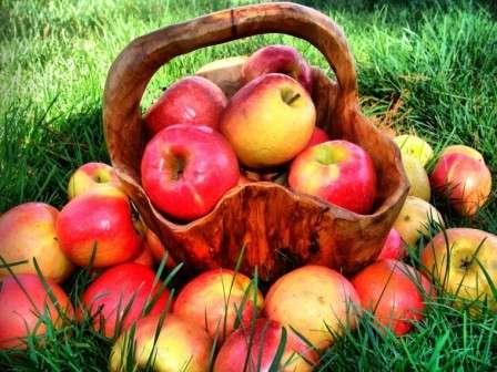 Тема сегодняшнего обсуждения на нашем фермерском сайте: посадка молодых яблонь весной — как все сделать правильно?