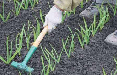 Не рыхлить грядки, так как корни растений справляются с этим самостоятельно и получают все необходимое.