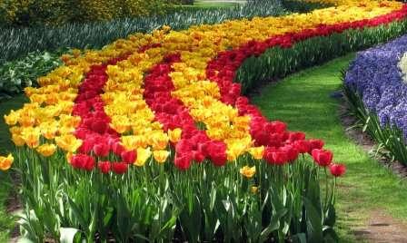 Цветник с тюльпанами нужно держать чистым от сорняков, так как они могут оказаться причиной заражения луковиц и, кроме того, забирают у цветов необходимую воду.
