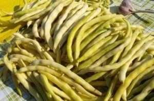 Не стоит затягивать со сбором урожая, так как стручки присохнут и раскроются, выбросив наружу ценные зерна.