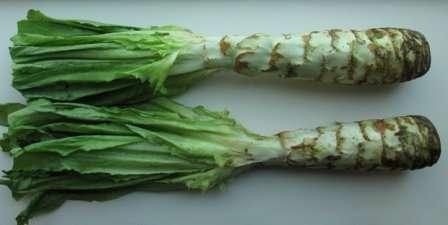 Стеблевой салат. Состоит из мясистого стебля и грубых листьев, в пищу идет и то, и другое.