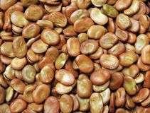 Фава — темно-коричневые бобы могут употребляться в пище со стручком, а после полного вызревания — без него.