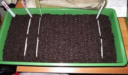 Минимум для подготовки почвы следует ждать 2 недели, максимум — 2-3 месяца.