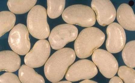 Лима — белые или зеленые крупные зерна, укрепляющие кровеносную систему.
