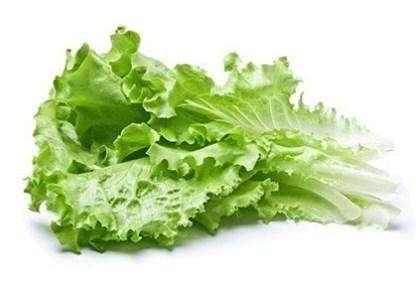 Листья салата — прекрасное сырье для приготовления вкусных витаминизированных салатов.