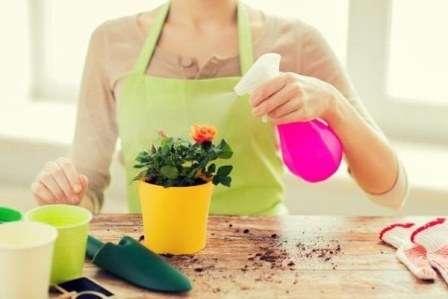Не обливайте удобряющим составом надземную часть растения, если он для этого не предназначен.