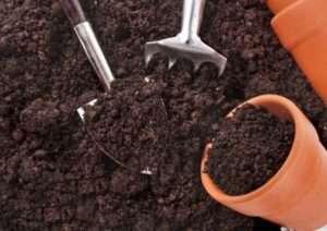 Для получения крепкой и здоровой рассады необходима правильно подготовленная почвосмесь.