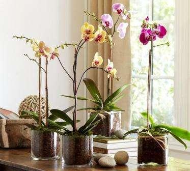 Существует два основных способа подкормить домашние цветы: 1. Использовать самодельные питательные составы. 2. Применять готовую купленную подкормку.