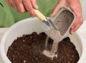 Для улучшения состава в почву для рассады добавляем песок (в объеме идентичному объему торфа или чуть меньше).