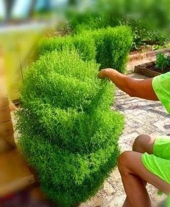 Создать приятную атмосферу на приусадебном участке могут помочь не только ярко цветущие культуры.